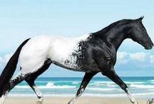 """Horses / """"In riding a horse, we borrow freedom""""  ― Helen Thompson / by Ramona Moreland"""
