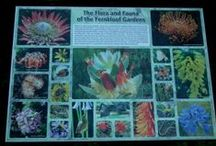 Hermanus Floral Kingdom
