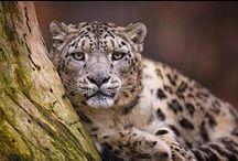 Nature, Wild & Wilderness / Nature & wildlife photographs