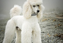 Dogs / by Raedine Wood