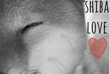 Shiba Love / by Elise DeWitt