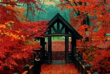 Autumn Bliss / by Kila Green-Wells