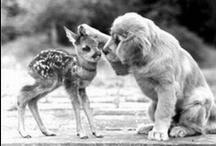 Cute Animals! / by Jessica Castillo