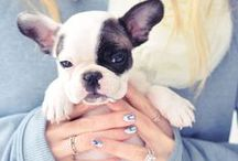 Cute Pooch / Pups, pooches, and the people who love them!