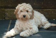 My First Puppy / by Jessica Castillo