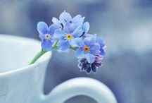 True Blue <3 / My Blue....