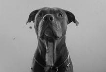 Animals / by Ally Evangelista