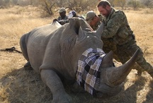 Info/News/Cause: Save the Rhino! / by C N