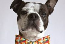 A Man's Bestfriend / Such dog. much cute. so procrastinate. wow / by Frank & Oak