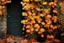 fall + autumn / Decorating and highlights of the season.