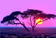 Africa / by Kris Bull