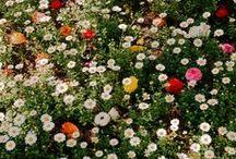 spring + love