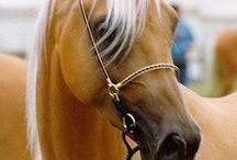 Horses / by Kris Bull