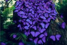 fairies, butterflies & such