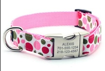 Pet Products and Info