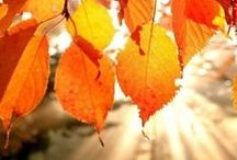 Autumn Falls / falling leaves