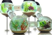Fish & Aquarium Mania