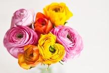 Seasons // It's Spring / Everything #spring!