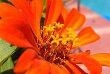 Colors // Orange: It Doesn't Rhyme / All things #Orange!