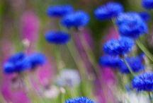 Colors // Blue: Indigo to Cornsilk / All things #Blue!