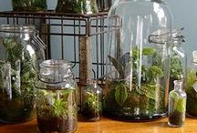Terrariums: Mini Ecosystems / Beautiful terrariums & how they are created!