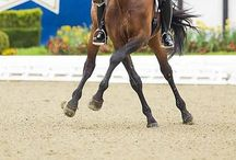 Dressage / by STORYBOARD.WS