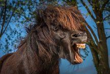 Badass Ponies