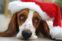 Basset Hound / by Kimberly Jacobs Middleton