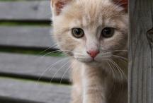 cats - kissat / by Kristiina K