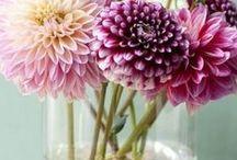 plants &flowers