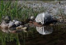 My Photography / Sharing some of the wildlife and nature photographs that I have taken.