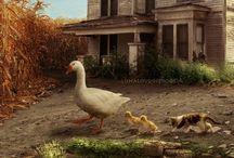 FARMS AND FARM ANIMALS