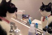 Cat people problems