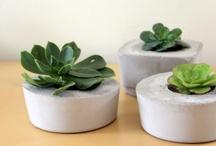 DIY Cement Pots