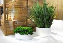Modern & Unique Pots for Plants & Flowers