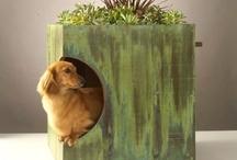 DIY Doghouses!