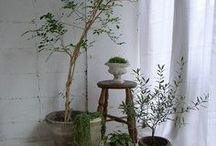 PLANT's / green plants, decorating with plants, urban living,