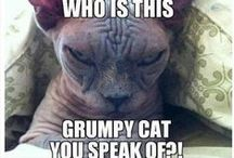 Cats (Mostly) + Captions / Because they power the Interwebz