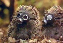 Hedgehogs. / by Nadezhda Ball