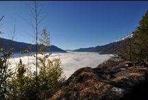Our landscape