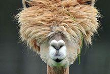 Animal Funnies / by Tammy Heagy-Klick