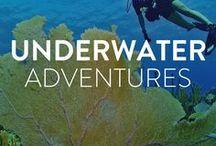 Adventures Under the Sea / Photos of the beautiful underwater world