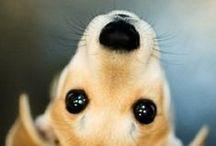 Its a Doggy Dog World!