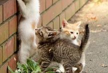 Lifestyle - Des petits chats