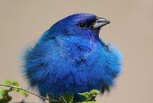 Bird Inspirations
