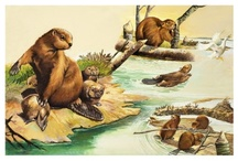 Beavers / Hands-on learning activities to accompany a unit study on beavers.  / by Evelyn Saenz