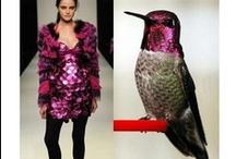 Haute Hummingbird / Hummingbird Inspired Fashion