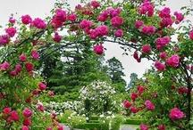 Garden Arbor and Arch