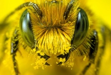 Bee Happy / All Things Bee and Bumblebee / by The Hummingbird Garden Diva