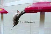 Hummingbird Video / Hummingbird Related Videos -